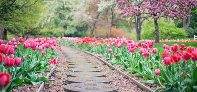 Comment aménager vos allées de jardin ?